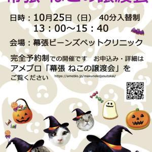 【拡散希望】明日は猫譲渡会!