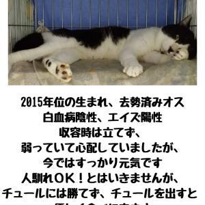 【拡散希望】猫のよね、ねね&猫の洗濯ネット通院について