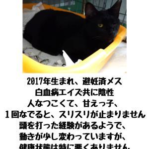 【拡散希望】黒猫の「ぬぬ」ちゃん、家族募集中(千葉市)