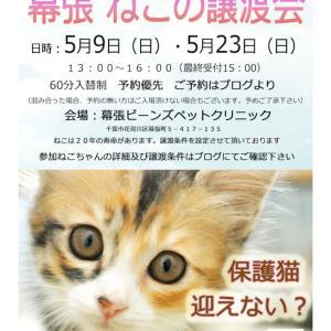 【拡散希望】46番ダルメシアンちゃん(5/23)譲渡会参加