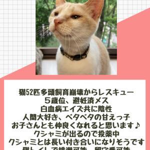 【拡散希望】本日、幕張で猫の譲渡会