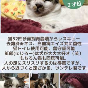 【拡散希望】犬と馴染みすぎの猫、虹郎家族募集中