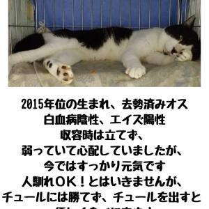 【拡散希望】エイズ猫達も家族募集中、よろしくお願いします