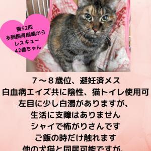 【拡散希望】野田猫サピちゃん、家族募集中