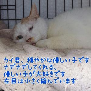 【拡散希望】カイ君、千葉市動物保護指導センターに収容中