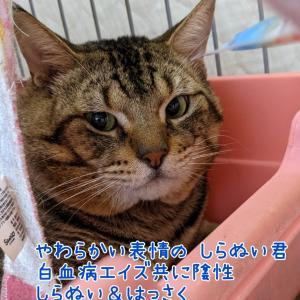 【拡散希望】動画追記★目が可哀想な子猫