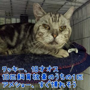【拡散希望】生まれたて猫もシニア猫もガンバ!