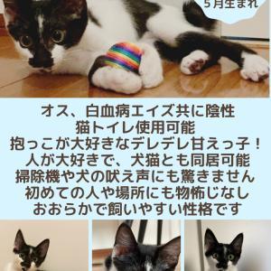 【拡散希望】9月12日(日)猫の譲渡会!