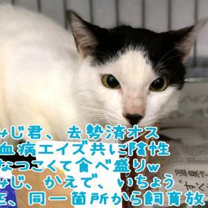 【拡散希望】同一箇所からの飼育放棄猫3匹