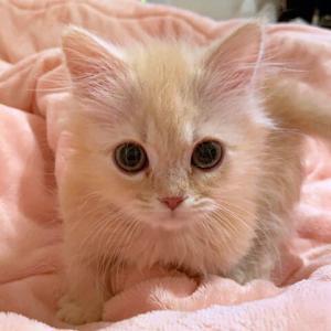 猫さんはお風呂がキライ ではなかった のでした。