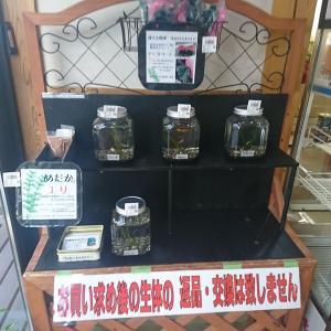 可愛いメダカ見つけましたよ、値段を見てビックリですよ。  ロケ地、東和道の駅