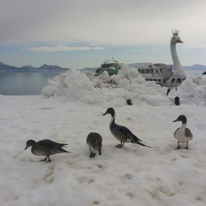 ショック猪苗代湖、白鳥号廃業 お疲れ様でした。
