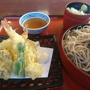 やっぱ、天ぷらはアツアツだね!冷たいざるそばもウマイ!本日のランチ和風レストラン「まるまつ」行って来ました!