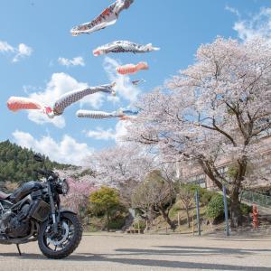 2019年04月09日奥武蔵桜ツーリング