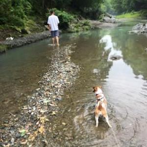 水遊びに吾妻峡へ●ワンコとおでかけ