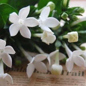 12月6日 #誕生花 #花言葉 #2019 #ブバルディア