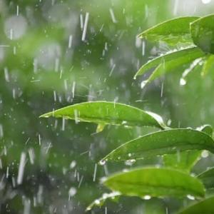 台風の影響:妃ジュエルのひとり言