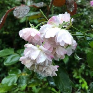 今日も朝から雨です