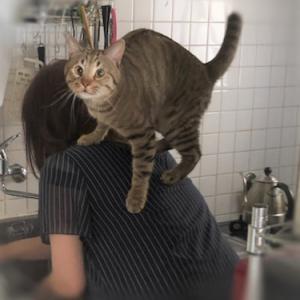 猫じゃらしで手首負傷&肩乗りニャンコ