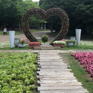 ▩ 紫陽花が見頃を迎えている 大阪・長居植物園 あじさい園
