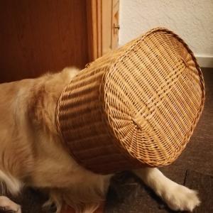 カミナリに暴れる大型犬に効果てきめんな方法が!