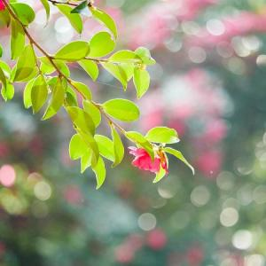 朝の優しい日差しに輝く花♪