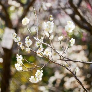 ポッカポッカ陽気に輝く白とピンクの花♪