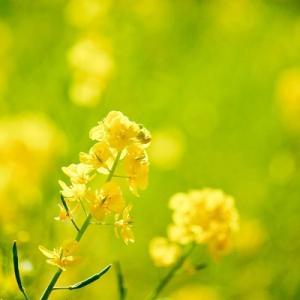 春の花とミツバチ君