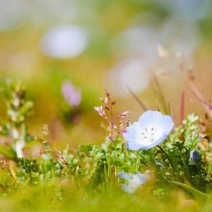 幻想的なちっちゃい青い花♪