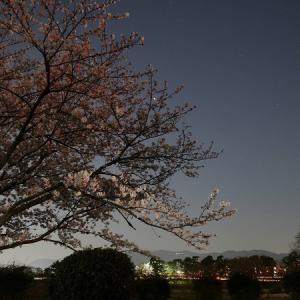 星降る都会の夜桜♪
