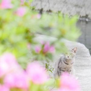 春爛漫:ホンワカ気分のノラさん