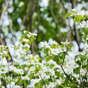 新緑まぶしい:白い花とパープルの花♪