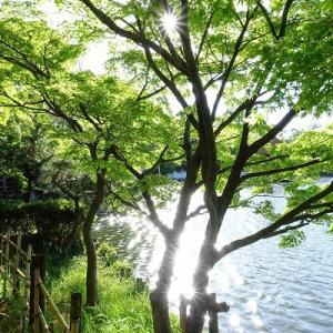 初夏の日差しに輝く緑の公園