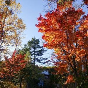色づく秋の高原