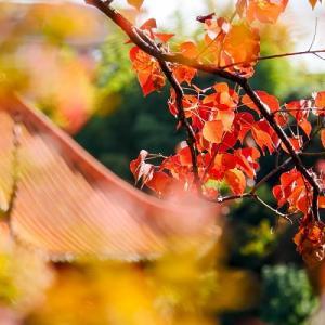紅葉の秋:アートを感じる公園