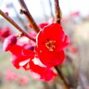 寒波の中で健気に咲く花。。。