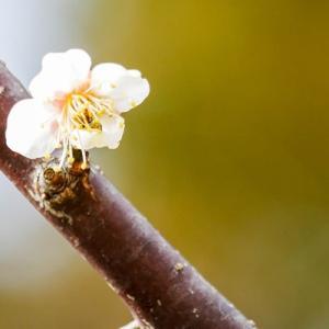 写真映えする春の花は?