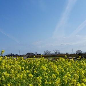 元気一杯の春の黄色い花♪