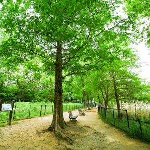 新緑まぶしい公園♪