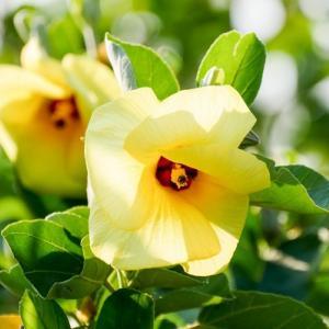 夏にピッタリの爽やかな花♪