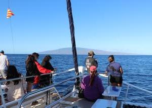 憧れのハワイ・マウイ島の旅⑰ ホエールウォッチングⅢラナイ島方面