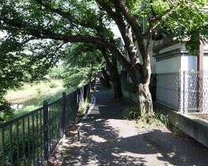 2021東京河川ポタリング『野川サイクリングロード』④「狛江市~調布市」