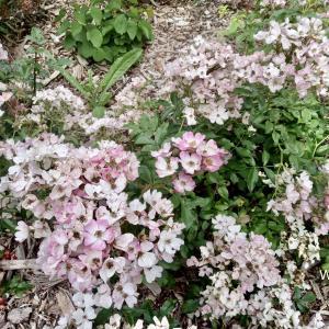 徒歩でフード調達の途中、お花が綺麗でした。