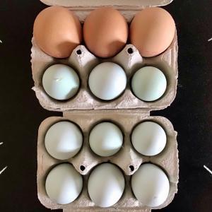 青い卵で幸せ気分&インド人農家さんのトマトと格闘☆