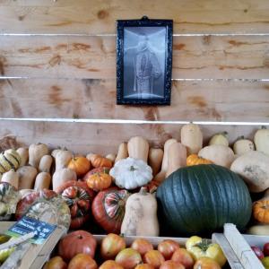 フジりんごの季節☆美味しい秋のフード収穫。