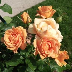 夏のオルレアン植物園②&メロンが美味しい季節になりました☆