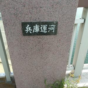 神戸兵庫運河(清盛橋)でエイが泳いでる?