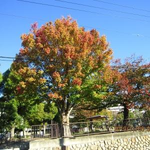 夙川河川上流から北山緑化植物園へ散策♪