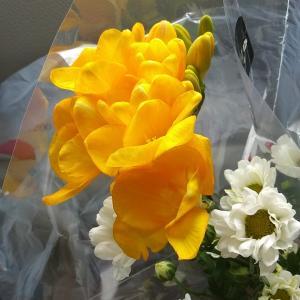 母のお誕生日にフリージアの花を添えました❤