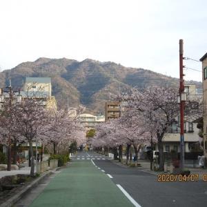 お花見シーズン終わりを満喫!六甲道から六甲せせらぎ通り~都賀川~福住公園~王子公園